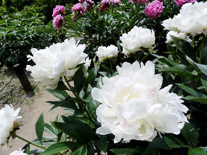 植物園の撮影スポット