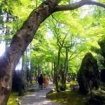 森の中で和装前撮り