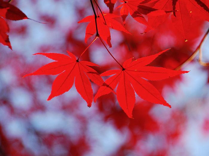 前撮り 紅葉シーズン