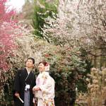 前撮り京都ロケ 桜の植物園